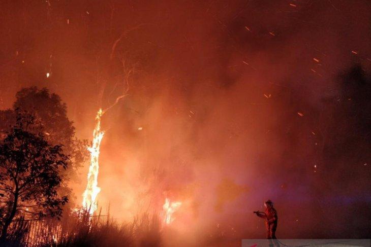 Ratusan warga Australia mengungsi ke negara bagian akibat kebakaran hutan
