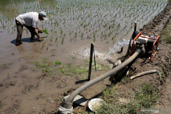 Di Kapuas Hulu, petani dilindungi BPJS Ketenagakerjaan