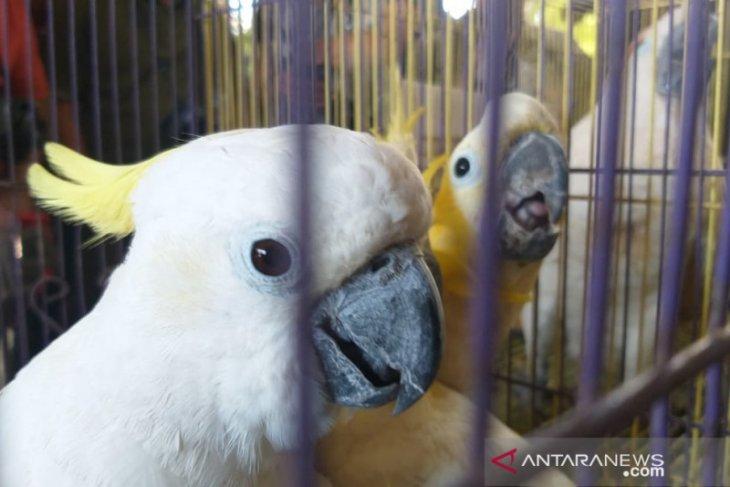 BBKP Surabaya gagalkan penyelundupan puluhan ekor burung langka (Video)