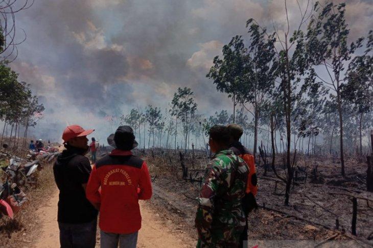25 Ha Lahan Perkebunan PT Inhutani II Terbakar