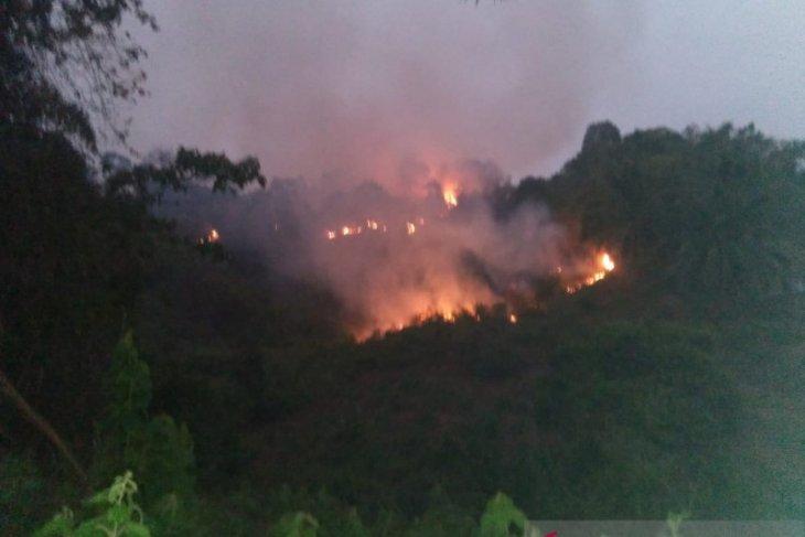 Brigdalkar Batanghari:  250 hektare kawasan Tahura Sultan Thaha terbakar