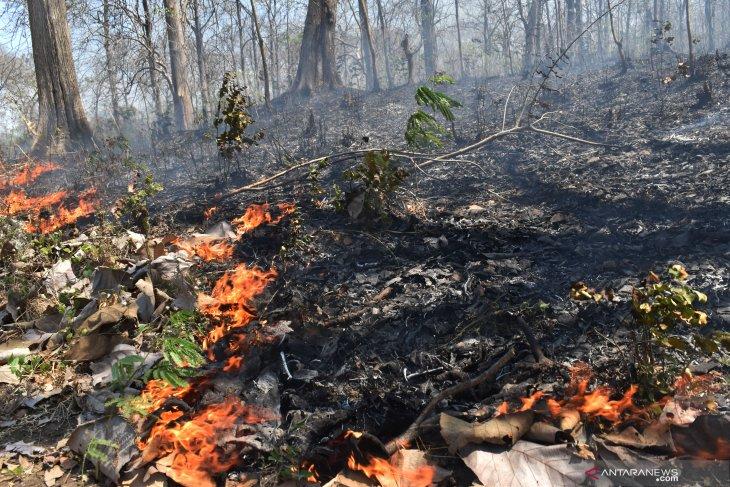 Hutan jati di Madiun terbakar