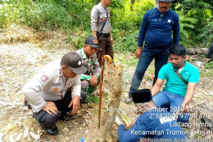 BKSDA Aceh Selatan sampai datangkan pawang untuk atasi gangguan harimau