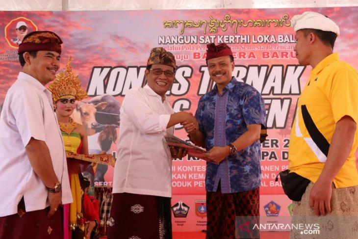 13-15 September, Pemprov Bali adakan kontes ternak-pedet