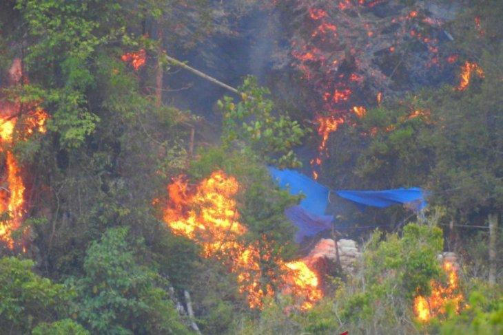 Kawasan hutan di Suwawa Timur-Bone Bolango terbakar
