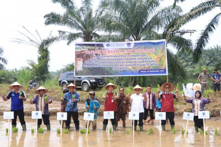 Bank Indonesia bantu kandang komunal sapi