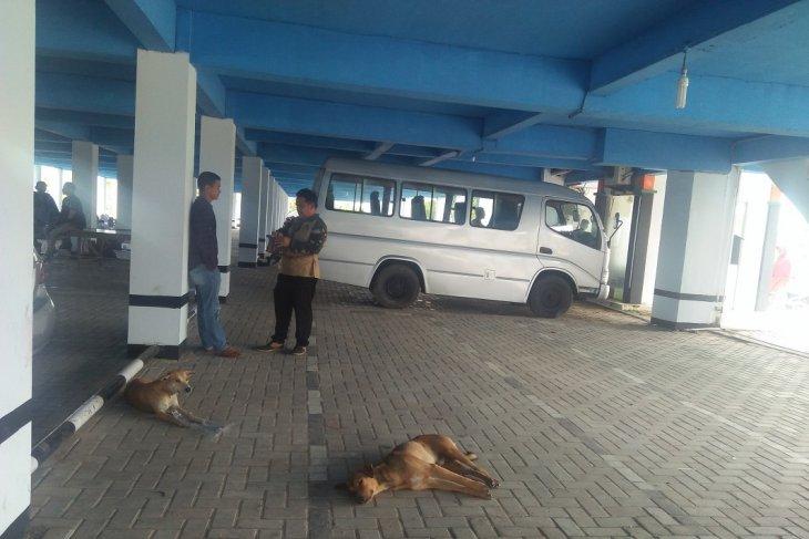 Distan batal eliminasi anjing liar karena keterbatasan dana