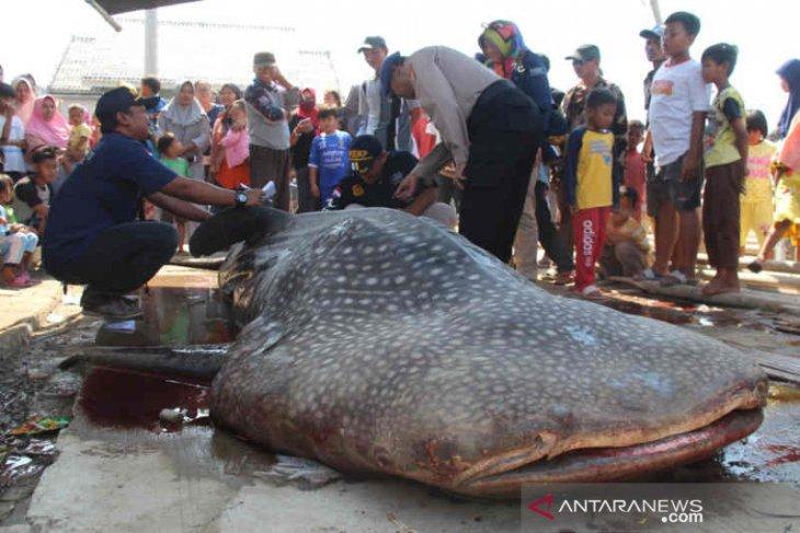 Cerita nelayan penemu hiu paus