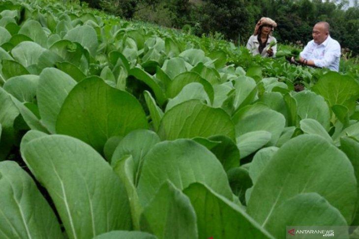 Pemerintah daerah diharapkan kembangkan potensi agrowisata di Karo