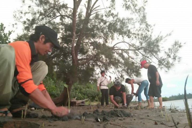 Mukomuko tanam 2.000 mangrove di pantai kritis
