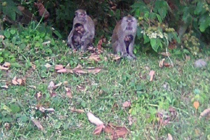 Mukomuko koordinasikan pembangunan kebun binatang