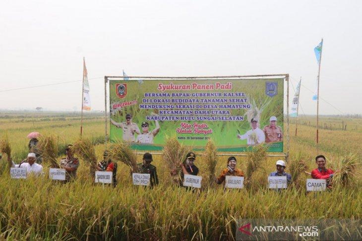 Video : Syukuran panen padi Poktan Cinta Maju bersama Gubernur Kalsel