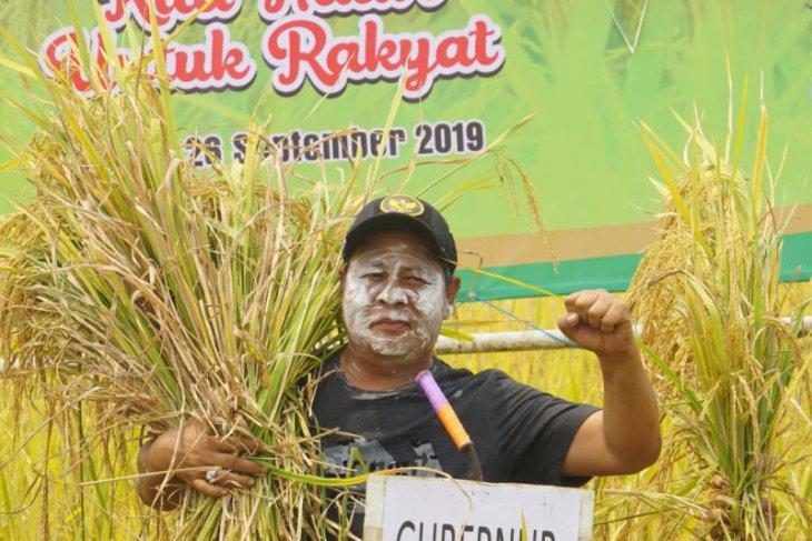 Panen padi di Nagara, Paman Birin imbau jangan bakar lahan