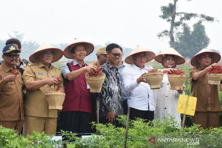 Petani di Deliserdang panen raya cabai merah