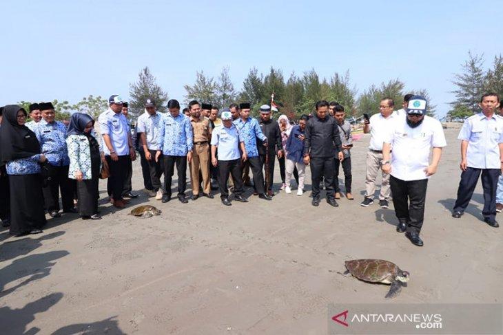 Dua penyu yang masuk jaring nelayan dilepasliarkan