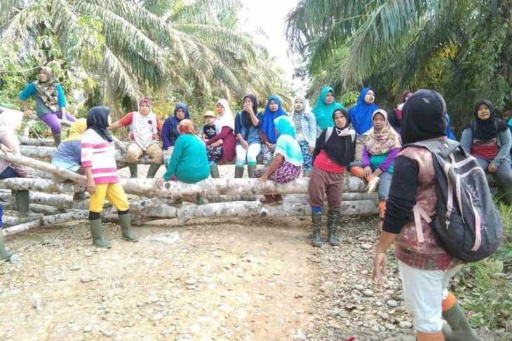 PT Agro Muko minta waktu terkait persoalan buruh perempuan