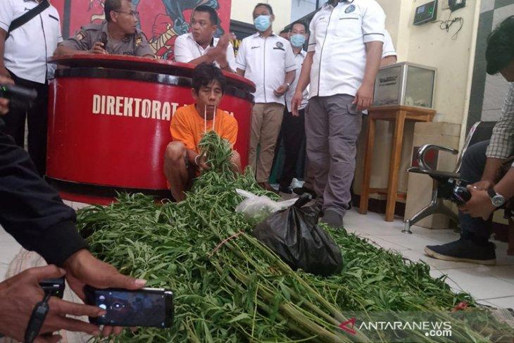Pemilik kebun ganja dalam Kota Bengkulu terancam penjara seumur hidup