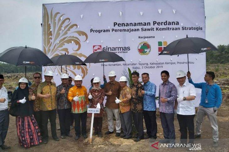 Tingkatkan produktivitas sawit, Sinar Mas Agribusiness and Food gelar replanting kebun kelapa sawit petani plasma