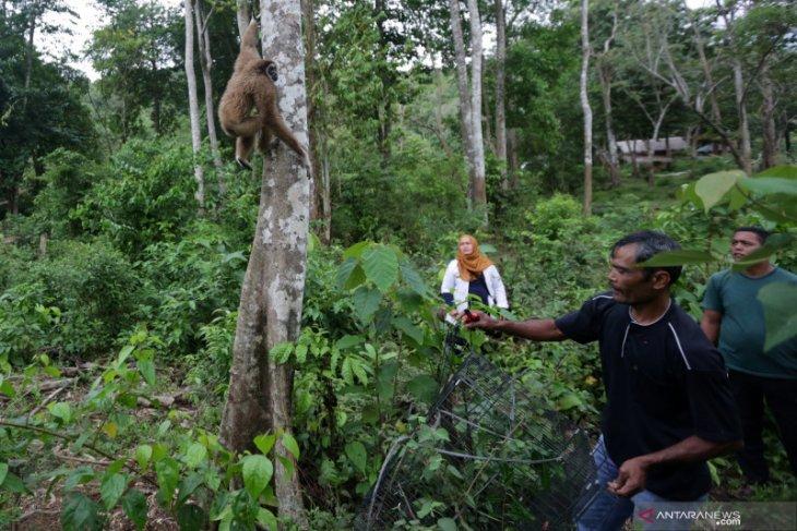 Puluhan satwa dilindungi dilepasliarkan ke Semidang Bukit Kabu