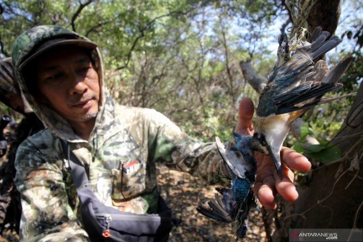 Kasus burung mati di Pamurbaya, Satpol PP Surabaya turunkan tim pelacak