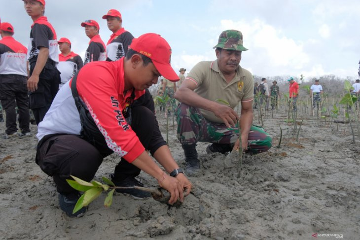 Kodam Udayana tanam 5.000 mangrove