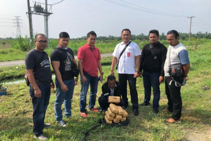 Polisi Langkat ringkus kakek asal Aceh pembawa ganja