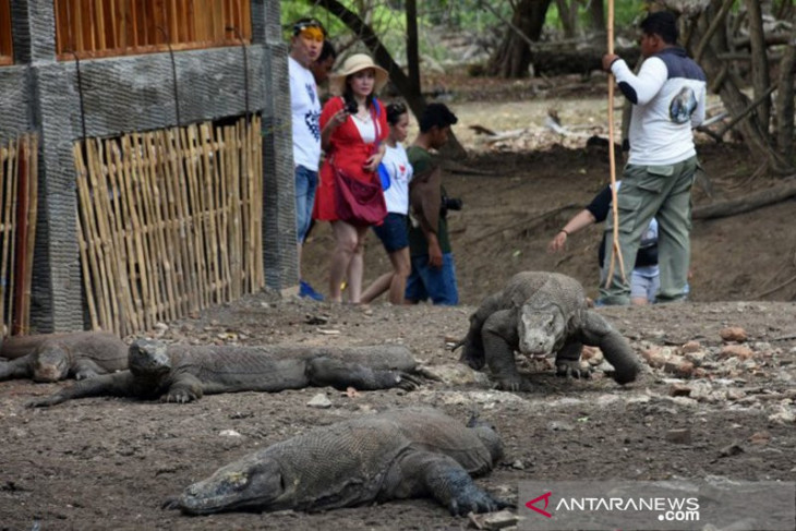 Komodo Island receives 5,719 visitors in Aug-Oct