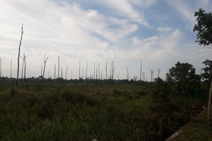 DLH Bangka Tengah akan menata hutan kota jadi kawasan wisata alam