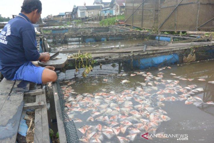 DPRD Banjarmasin dampak soroti kematian puluhan ton ikan tambak