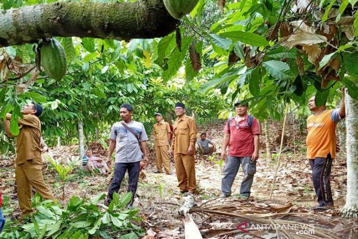 Aceh Timur komit kembalikan kejayaan kakao