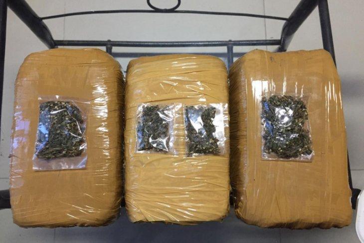 Polres Bintan amankan tiga kilogram ganja, tangkap seorang pelaku