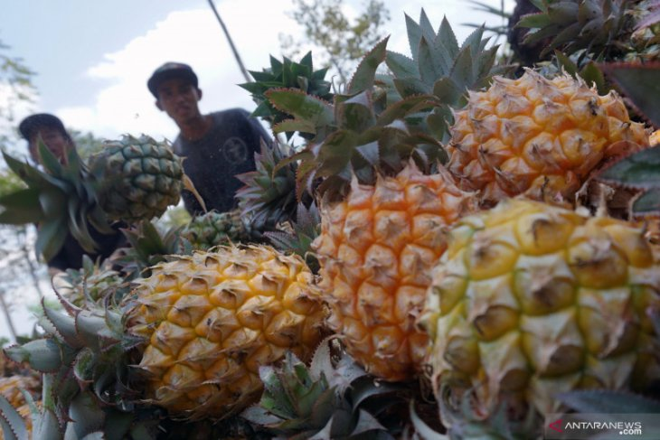 Indonesia set to penetrate US pineapple market