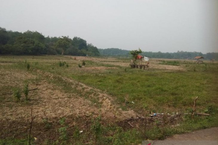 Sawah kekeringan di Desa Sarang Burung Muarojambi