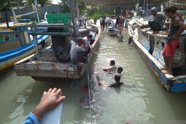 Nelayan Kabupaten Bangka Selatan temukan hiu terdampar