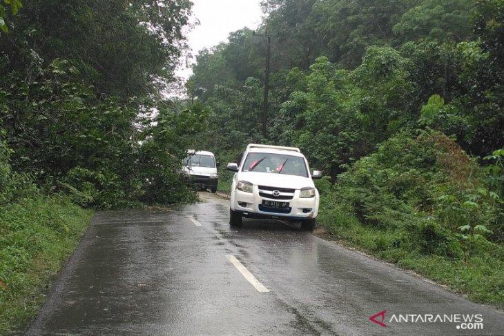 Pohon tumbang nyaris tutup jalan Batanghari-Jambi lintas Ness