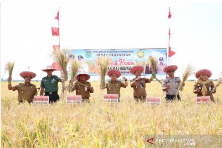 Tanah Bumbu farmers harvests 530 hectare rice in dry season