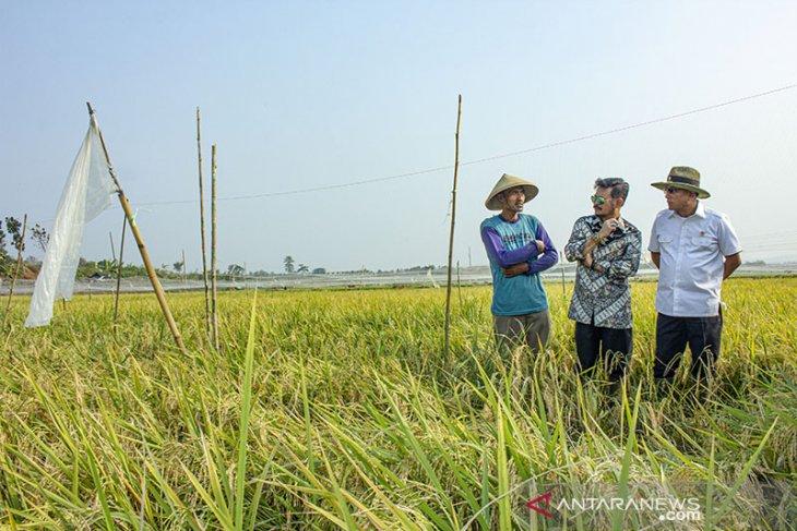 Kunjungan Menteri Pertanian di Karawang