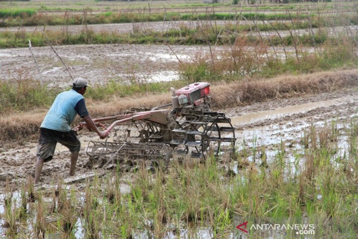 Lahan Pertanian Kaltim Dukung Pemenuhan Pangan IKN