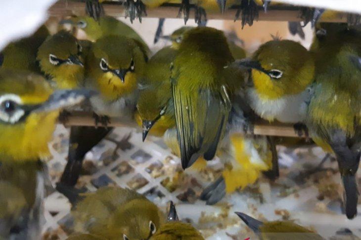 Penyelundupan ribuan burung digagalkan Karantina Cilegon