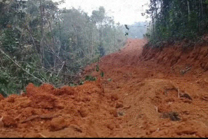 Dampak Penebangan Hutan Secara Liar Terhadap Lingkungan ...