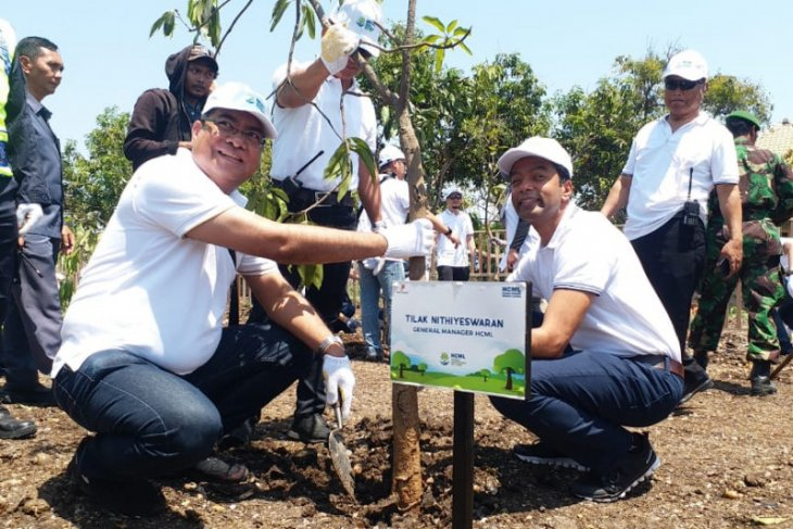 HCML tanam 15 ribu bibit mangrove di Pesisir Pasuruan