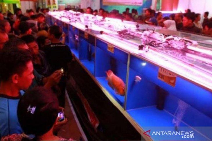 Kontes arwana Kalbar diserbu ribuan pengunjung