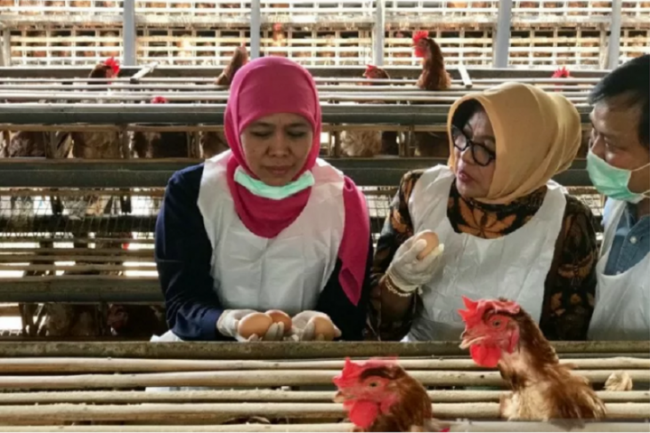 Peternak ayam di Blitar tak khawatirkan isu telur terkontaminasi dioksin