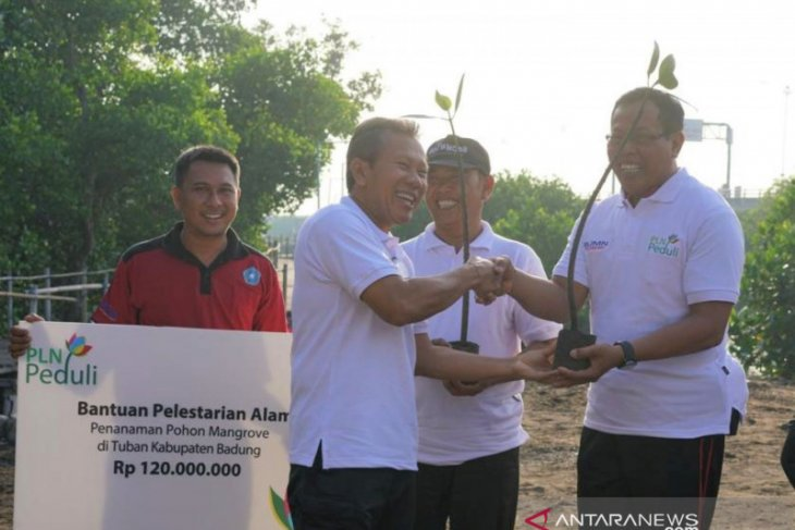 PLN Bali tanam ribuan pohon mangrove di Kampung Kepiting