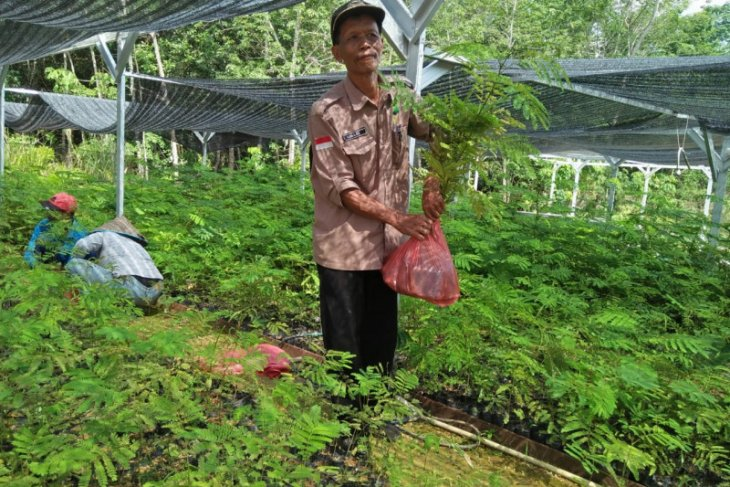 KPH Tabalong prepares free seedlings to support Green Revolution