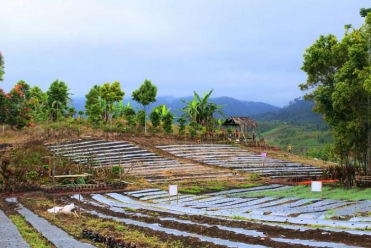 Enam desa di Jangkat sepakat selamatkan TNKS melalui pemanfaatan lahan kritis