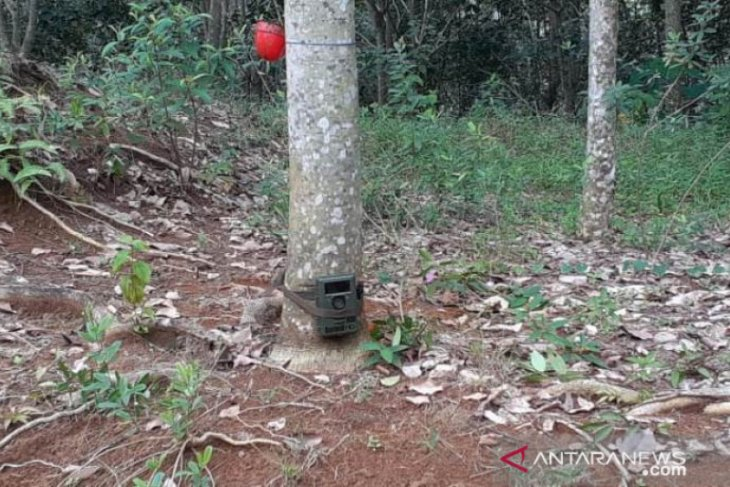 AL alias Dangdut sikat 13 kamera trap pemantau harimau, dijual Rp500 ribu