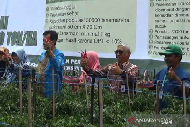 Program proliga Kementan untuk dongkrak produksi cabai nasional
