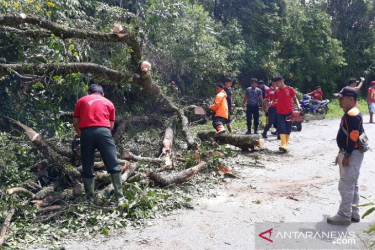 Jalan Agam-Bukittinggi tidak bisa dilalui akibat tertutup pohon tumbang