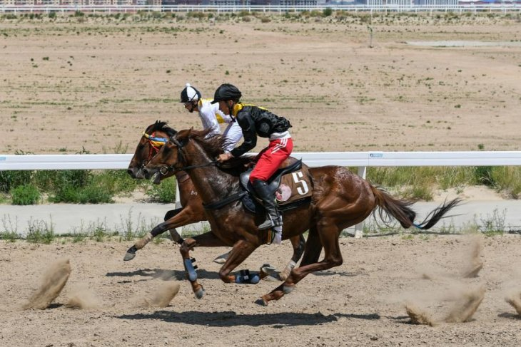 China's horse capital Xilingol League eyes faster ride in equine industry growth